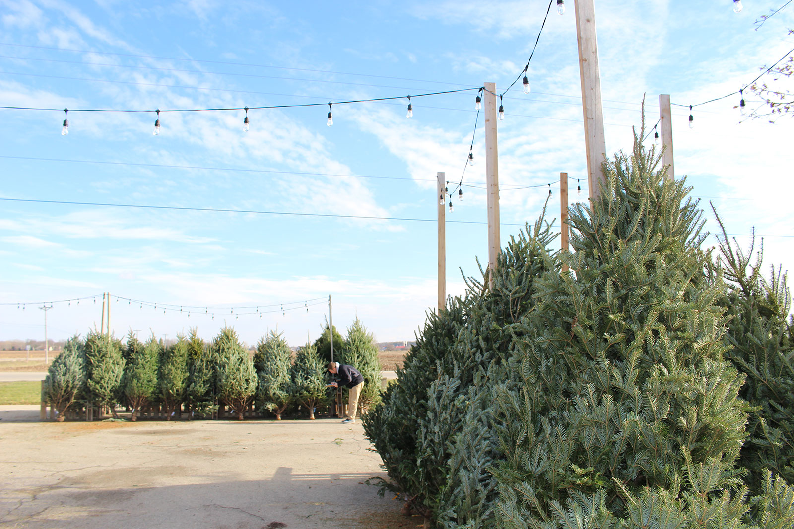 real christmas trees for sale in appleton wi - Real Christmas Trees For Sale